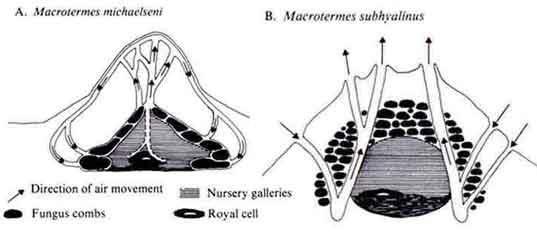 Arhitectura biomimetica